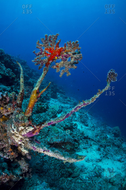 New life growing on top on dead coral