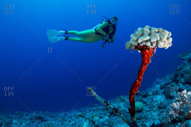 Female diver looking at coral