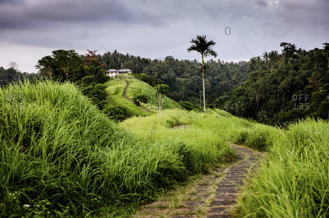 Path leading to a mansion through rice paddies and hills in Ubud, Bali, Indonesia