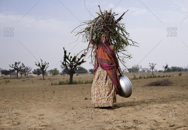 Pushkar, India - February 2, 2013: Indian woman carrying faggots on her head