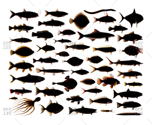 A collection of commonly consumed fish arranged in a collage