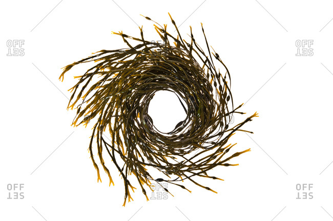 A spiral constructed from seaweed