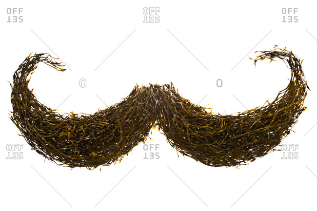 A mustache constructed from seaweed