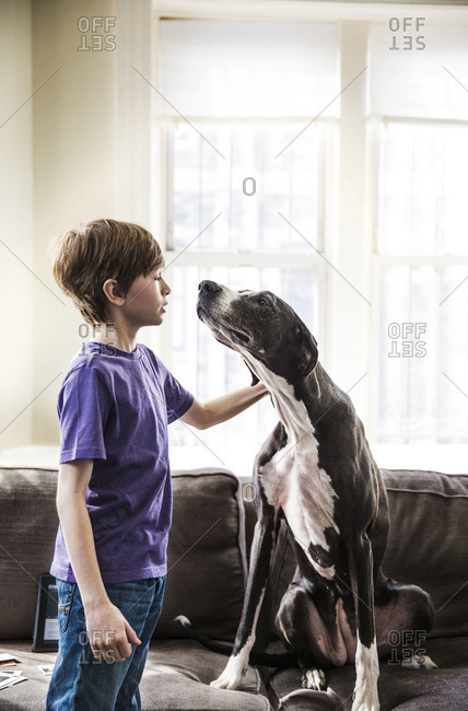 A boy plays with his very big dog on the couch