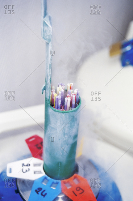 Straws of spermatozoids frozen in liquid nitrogen