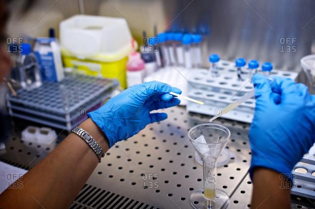 Laboratory technician analyzing the pH measurement of sperm using litmus paper