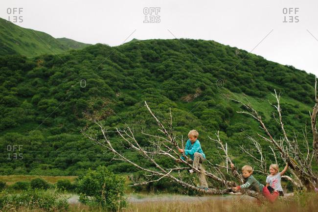 Kids climbing up a tree