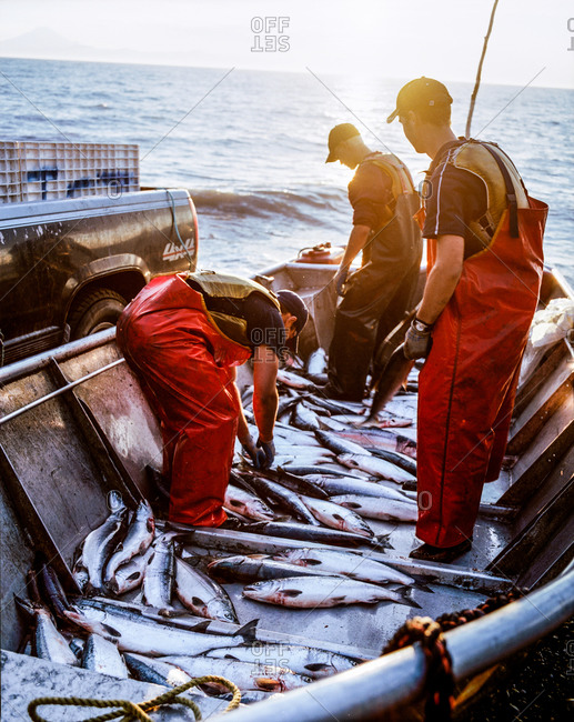 Clam Gulch, Alaska - July 25, 2006:Fishermen standing in a boat full of fish in Alaska