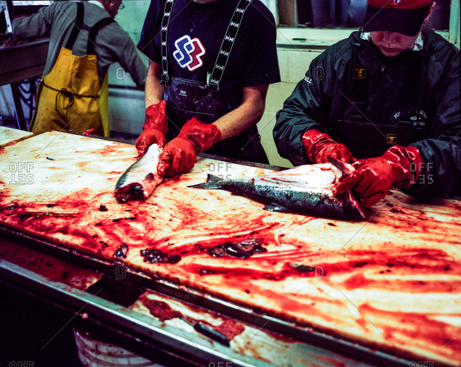 Clam Gulch, Alaska - January 30, 2012: Workers cleaning salmon in a canning plant in Alaska