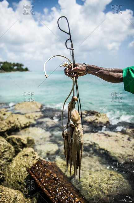 Man holding freshly catch octopus at Half Moon Bay, Barbados