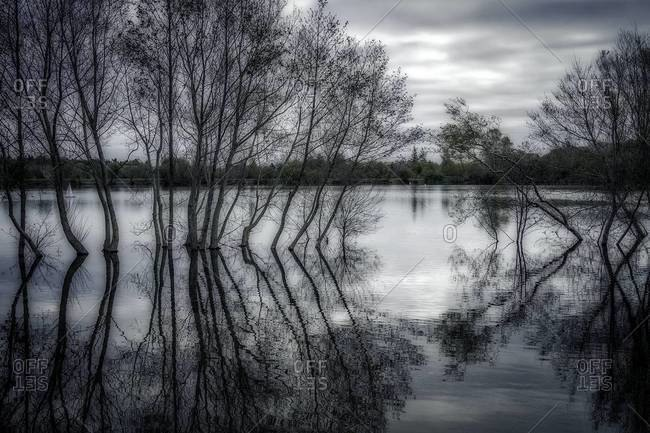 Trees reflecting on the surface of a lake