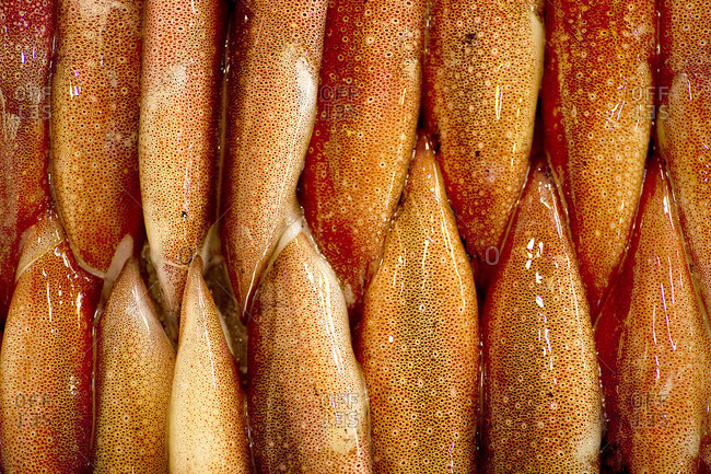 Close up of squids at Tsukiji Fish Market, Tokyo