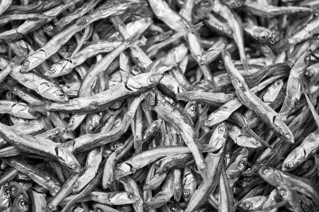Pile of anchovies at Tsukiji Fish Market, Tokyo