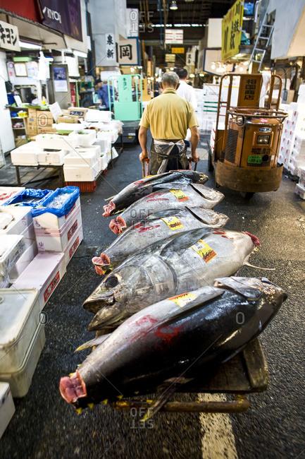 Tokyo, Japan - July 9, 2008: Man pulling tuna fish on cart at Tsukiji Fish Market