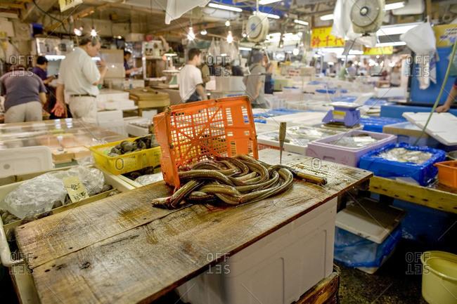 Eel ready for filleting at Tsukiji Fish Market, Tokyo