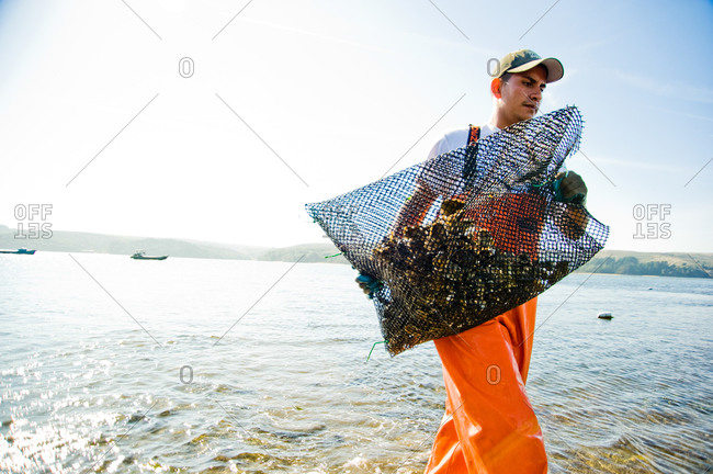 October 21, 2011 - Point Reyes, Calfornia: Fisherman carrying a bag full of fresh oysters in a farm