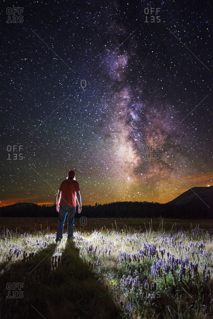 Man stands illuminated in a field of lupine wildflowers looking at the Milky Way in Hope Valley, California