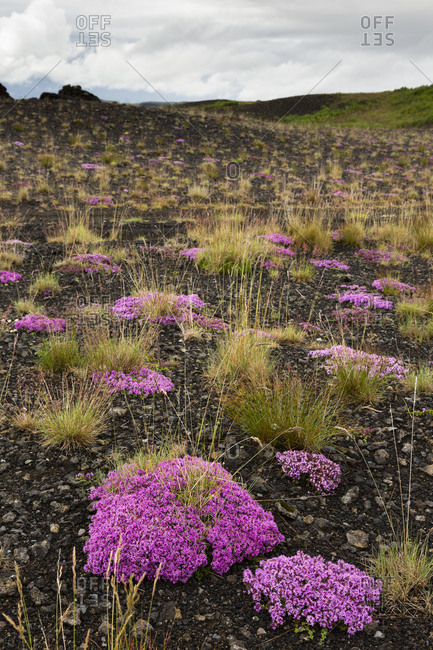 Pink blooming plants in the Southern Highland Region