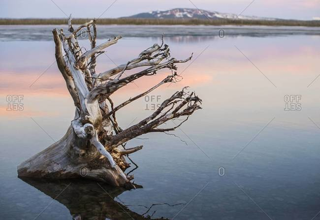 View of a dry tree in a lake