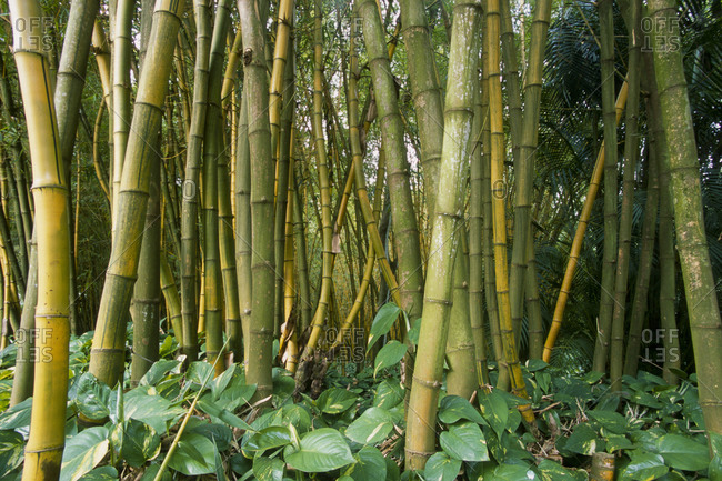 national tropical botanical garden stock photos - OFFSET