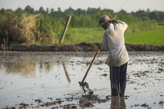 Man working on a rice field in Vietnam