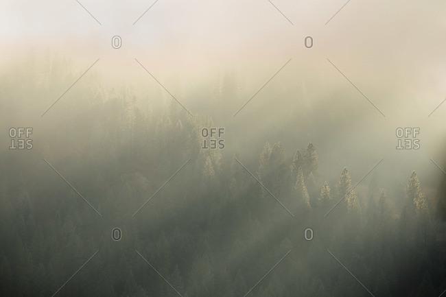 Sunshine seeping through the fog above a forest in Orofino, Idaho