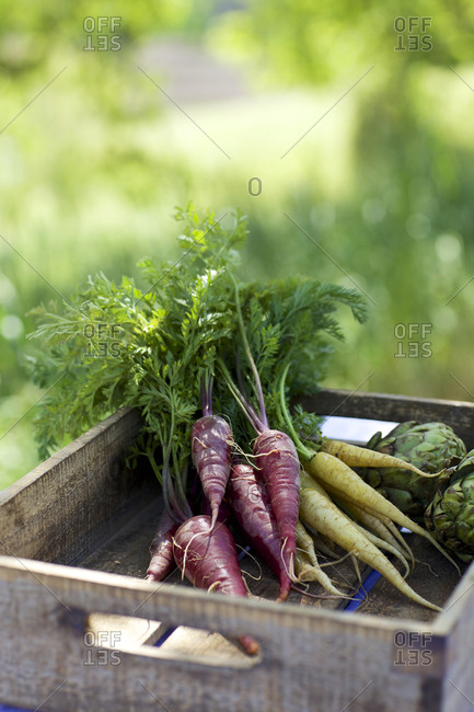Fresh picked vegetables in a wooded crate