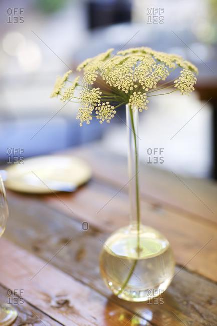 Wild flower in vase set on rustic wood table