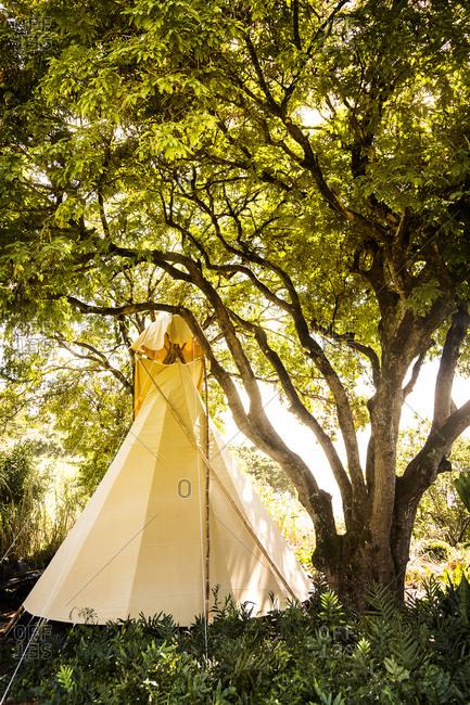 Tent in a Hawaiian rainforest, Maui