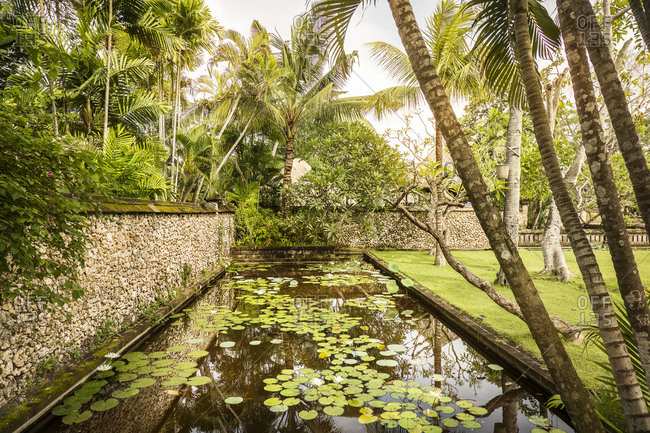 Pond with lily pads in an exotic garden