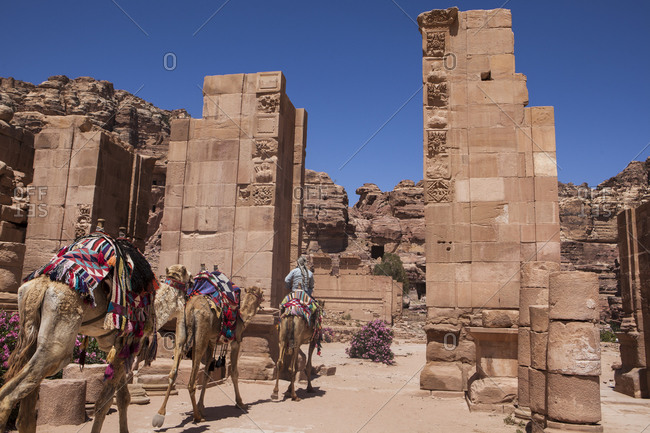 Camels passing through the Arched Gate in Petra, Jordan