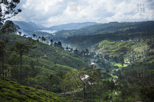 Castlereigh Reservoir in the distance, surrounded by tea plantations, Sri Lanka
