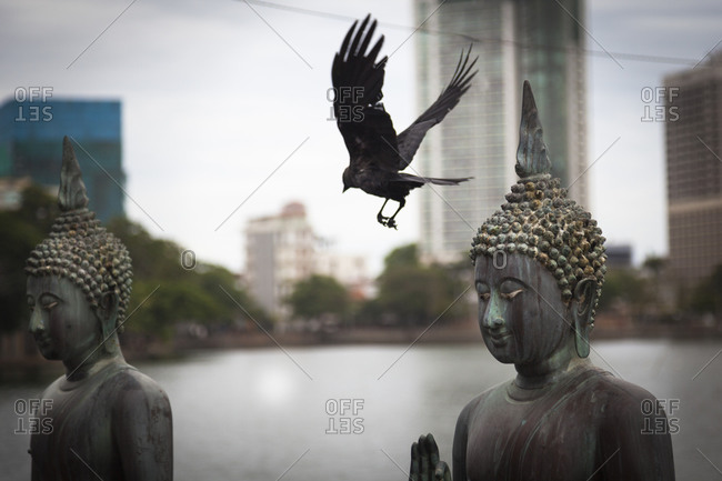 A crow flies between two statues of the Bhudda in Colombo, Sri Lanka