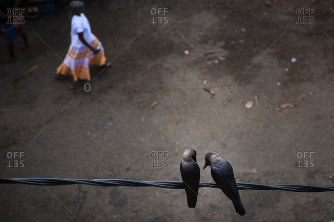 Two rooks on a wire in Galle, Sri Lanka