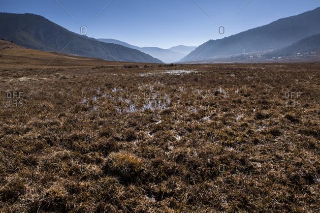 Marshland in the center of the Phobjikha Valley, Bhutan