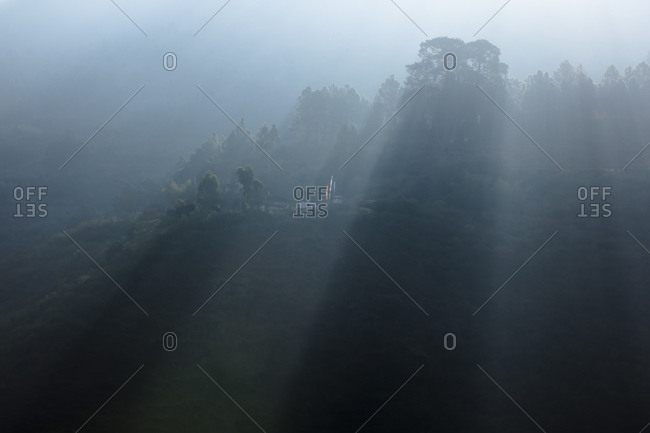 View of a forest in the morning near Wangdue Phodrang, Bhutan