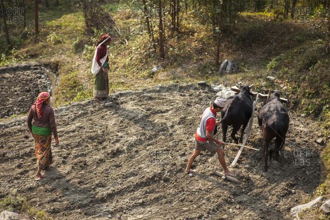 Baglung, Nepal - February 13, 2011: People plowing the land in Baglung, Nepal