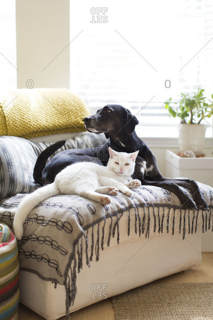 Cat and dog lying together on sofa