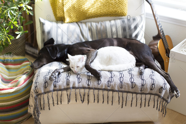 Dog and cat napping together on couch