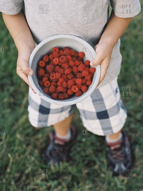 Boy showing freshly picked raspberries