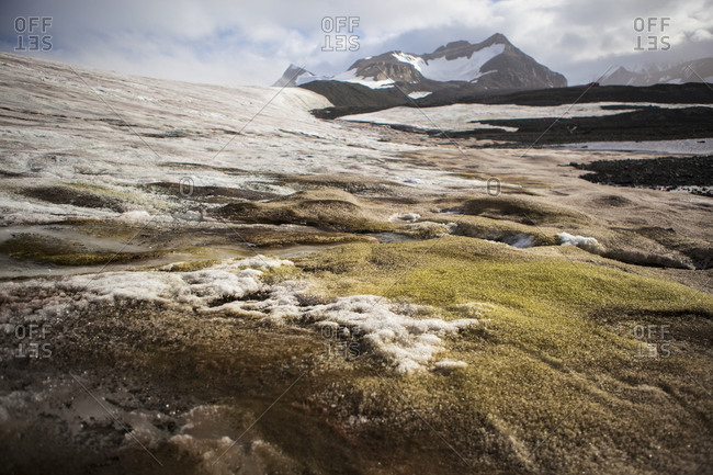 Algal bloom at the edge of the Buenos Aires Glacier nearby the Esperanza base in Antarctica
