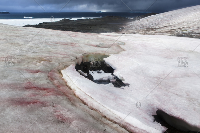 """The Buenos Aires Glacier in Antarctica, with blooms of """"watermelon snow"""" on its surface"""