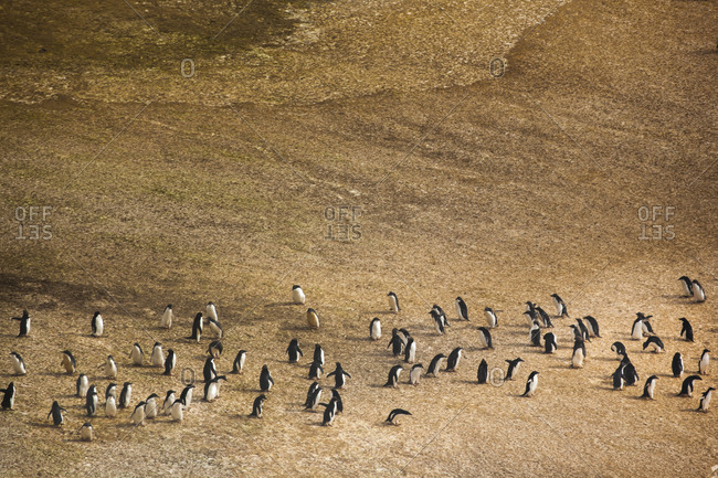 Penguin colony on the Antarctic peninsula