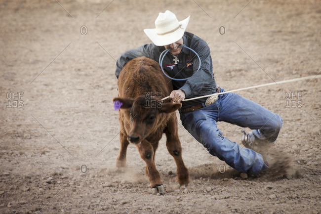 New Mexico, USA - May 11, 2013: Cowboy caught a calf in Truth or Consequences, New Mexico, USA