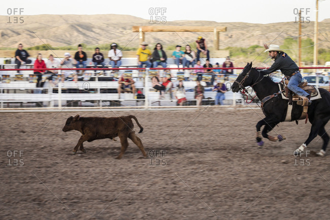New Mexico, USA - May 11, 2013: Man tosses a lasso around a calf at the rodeo in Truth or Consequences, New Mexico, USA