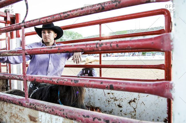 New Mexico, USA - May 11, 2013: Bronc rider waits for the chute to open in Truth or Consequences, New Mexico, USA