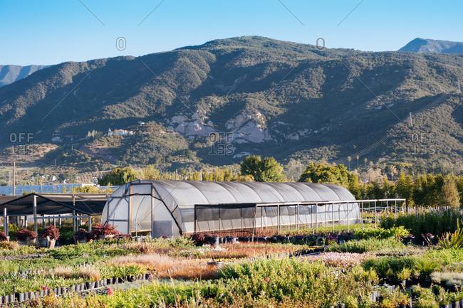 A greenhouse in Carpinteria, California on a farm in the morning near Santa Barbara