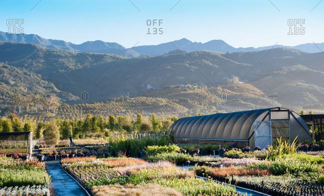 A small greenhouse in Carpinteria, California on a farm in the morning near Santa Barbara