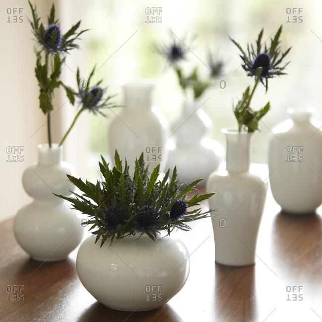 Still life of different shaped white vases