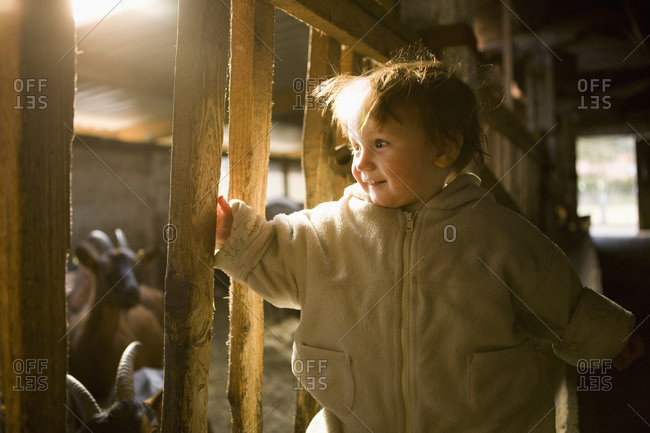 Baby girl standing in barn and smiling